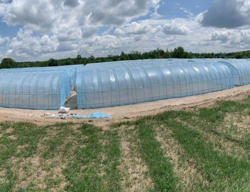 Greenhouses, Kawartha Lakes